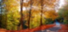 fall-photography-5.jpg
