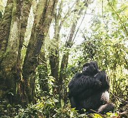 Virunga14.jpeg