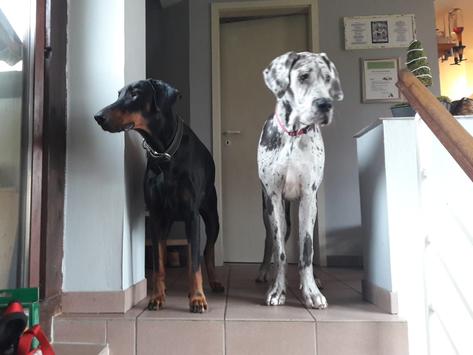 Linus & Bella