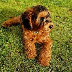 #doggymodel #4seasons4paws #dogwalker #d