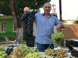 Kitskany farmer grapes