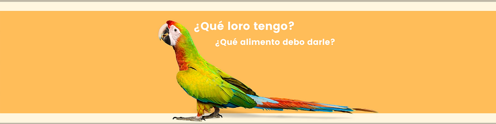 Banner navidad (1).png