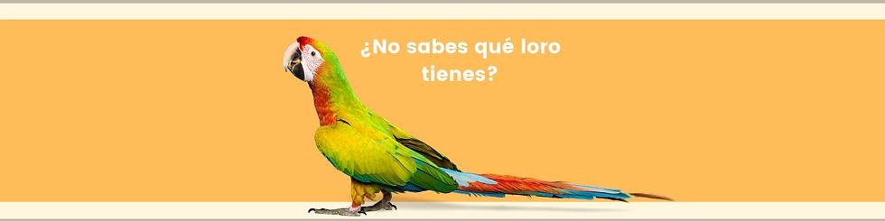 Banner navidad.png