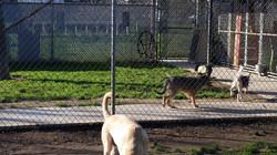 Front dog yards