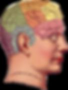 Phrenological Head.png