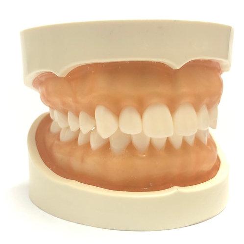 DentоForm N-5