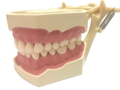 DentoForm AG-3 +