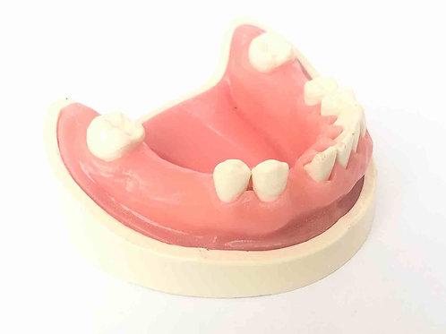 DentoForm N5-H2