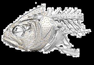 fish%20landmarks_edited.png