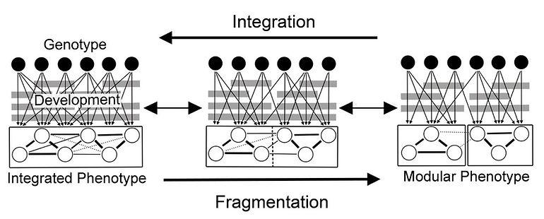 modularity.jpg