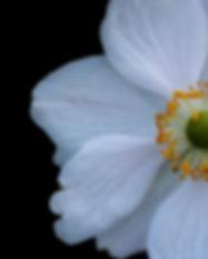 half daisy.jpg