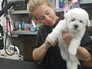 Danica pampering a little Maltipoo .jpg
