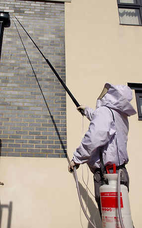 Betapest are specialists in getting rid of unwanted wasps and insects.