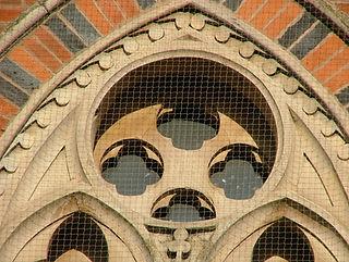 Bird and pigeon proofing buildings around Birmingham using nylon netting.