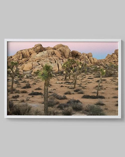 Desert Wonder. (Joshua Tree, California)