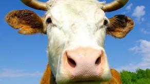 @Du blöde Kuh...