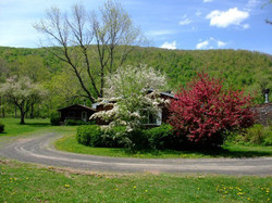 Spring time flowering trees