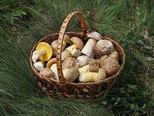 Go on a Guided Mushroom Walk