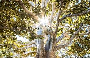 tree pic.jpg