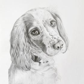 Emma Tooze Portraits