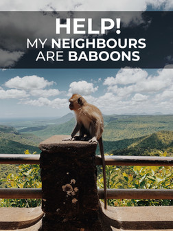 We follow a tribe of baboons as they show their babies how to break into houses, open fridges and remove French windows.