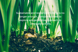 Sustainability and resilience