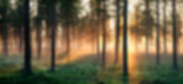 Picture of forest.jpg