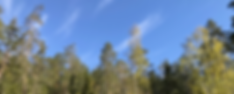 skog.png