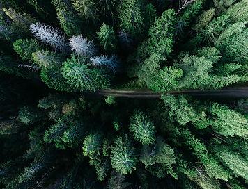 forest-1866837_1280.jpg