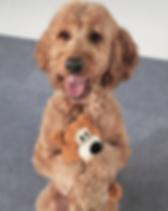 Koda-hug-a-dog-toy-dog-trick.png