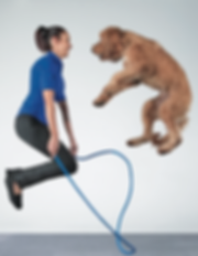 suhey-perondi-dog-tricks-koda-jumprope.p