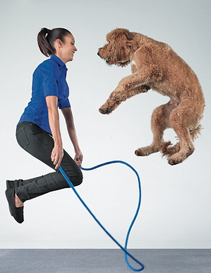 suhey-perondi-dog-tricks-koda-jumprope.p