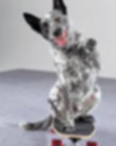 Spider-dog-trick-skateboard-paw-wave.png