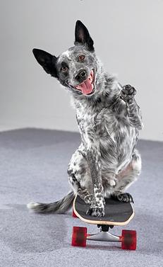 Spider-dog-trick-skateboard-paw-wave.png