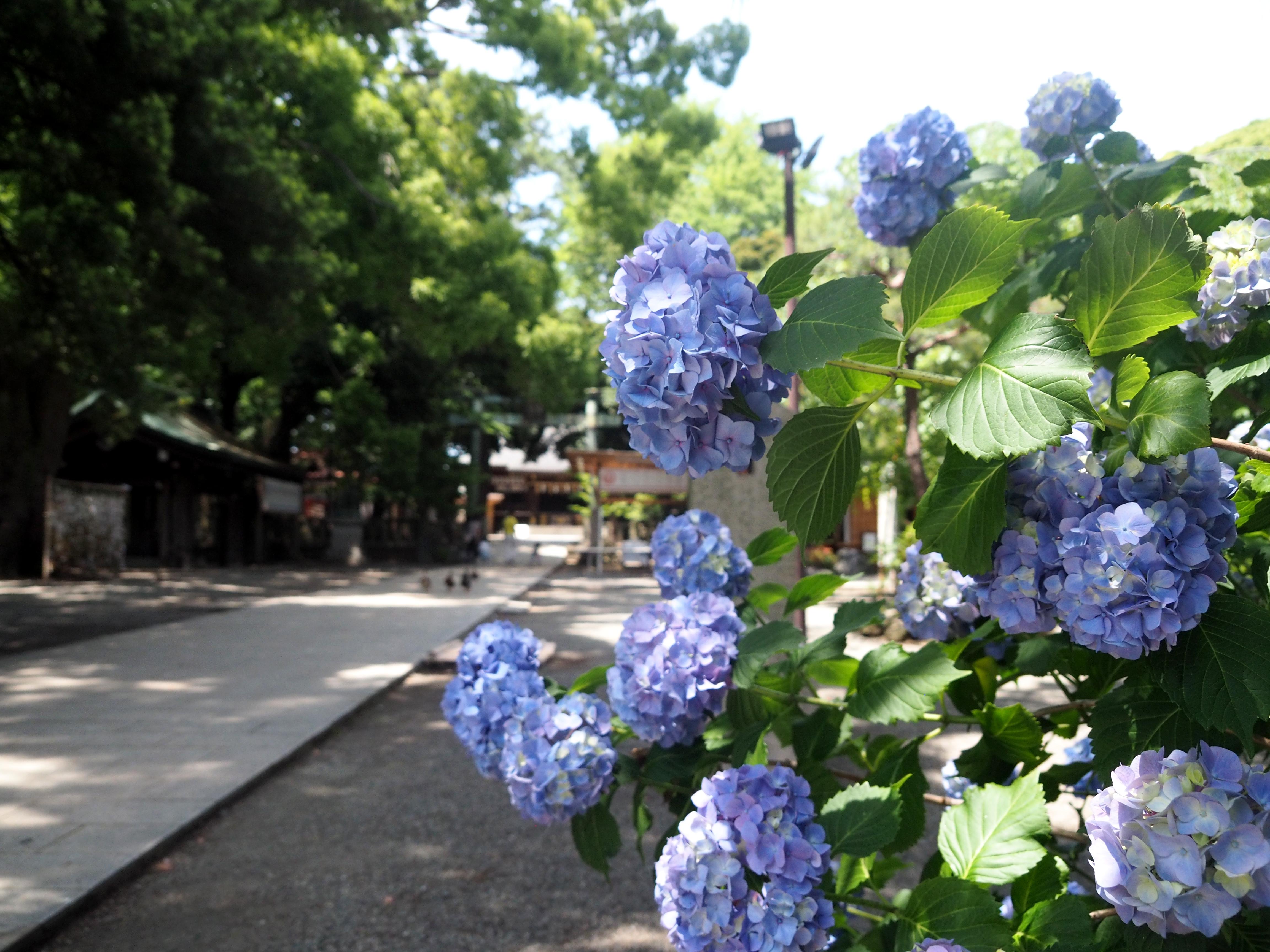 Hiratsuka_133.JPG