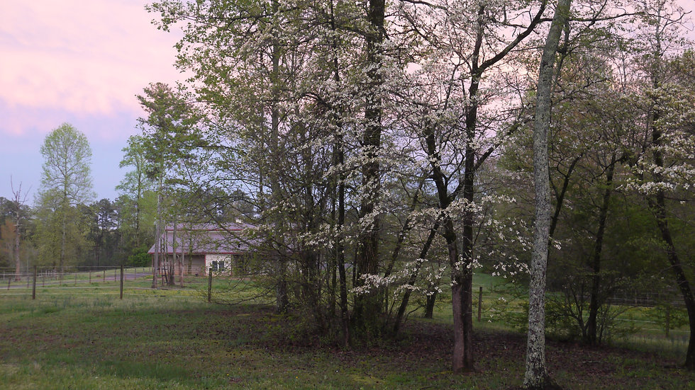 spring3.JPG.jpg