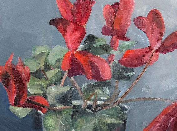 Scarlet cyclamen