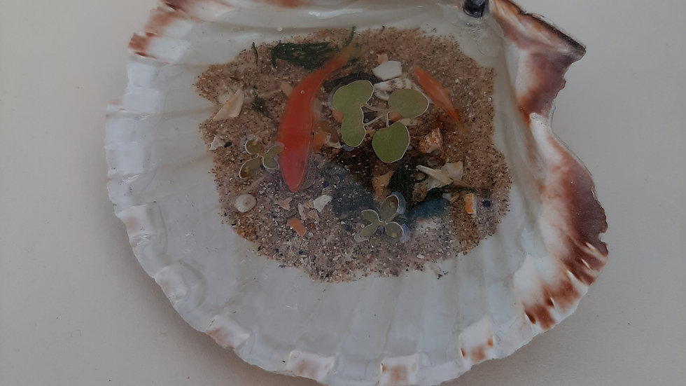 Scallop shell with 3D fish in resin