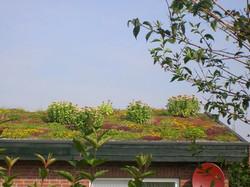 Haus mit Gründach
