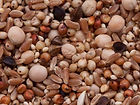 no-corn-pigeon-mix-a6c6620c.jpg