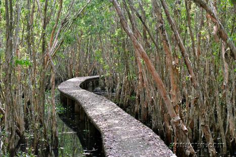 Làng nổi Tân Lập - Lạc lối trong rừng tràm