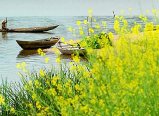 Mùa hoa cải bên sông
