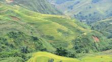 Thung lũng Mường Hoa - Mùa lúa chín