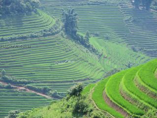 Sapa: Mùa lúa xanh ở Thanh Kim