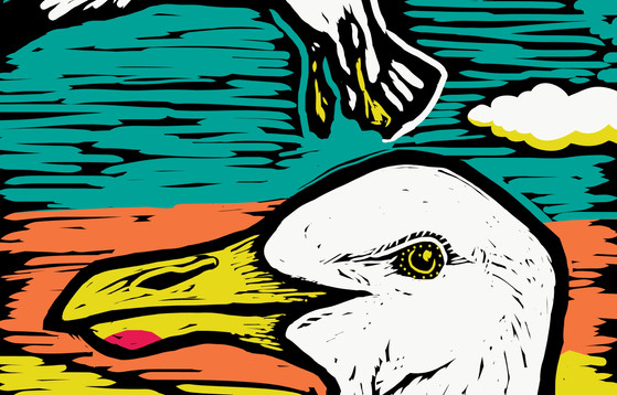 Seagull-Small banner