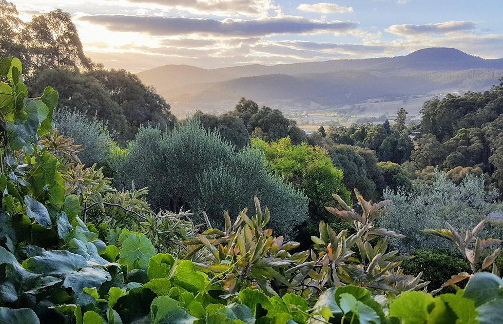 Verdant Way • Landscape Design • Hobart