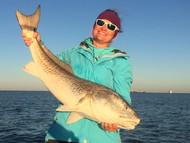 red drum run gulf of mexico