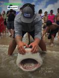 land based bull shark