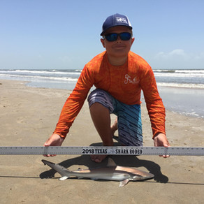 Shark Daycare