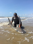land based shark fishing